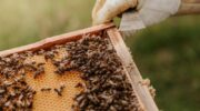 The Benefits of Beebread for Women